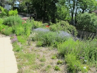 Wildblumenbepflanzung