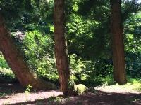historischer Baumbestand